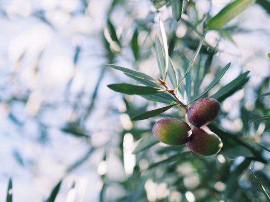 olive_nakaniwa2