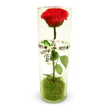 1本の美しさ際立つバラ